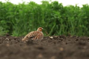 Rolnictwo oparte o GMO zagrożeniem dla ekosystemu i człowieka