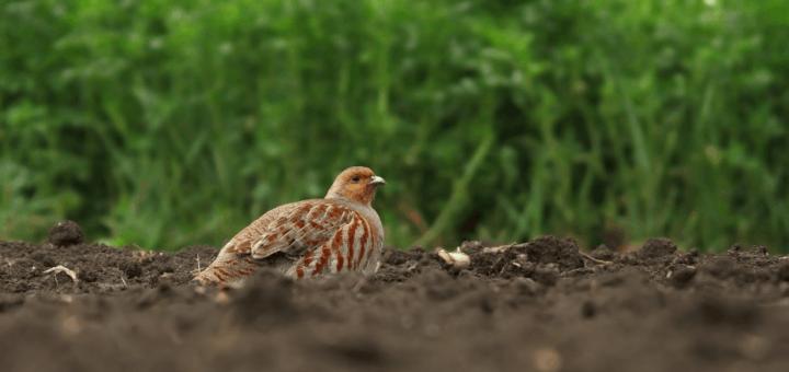 bioróżnorodność rolnictwo