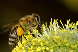 pszczoły wymierają