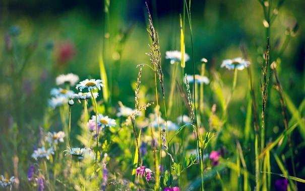 Kiedy zioła mają uzdrawiającą moc Co warto o nich wiedzieć