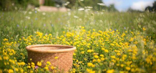 zioła w maju