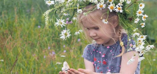 czerwcu jakie zioła mają moc zbieramy