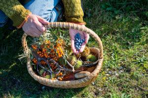 dzikie owoce na przetwory