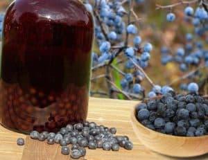 sok z tarniny, wino z tarniny, powidła z tarniny tarnina