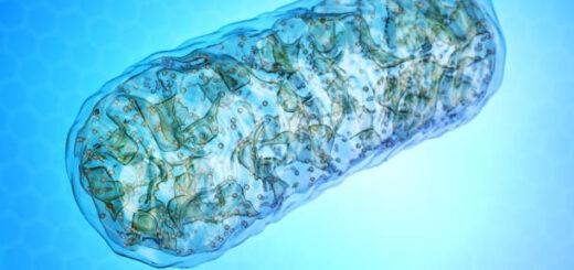Mitochondria - elektrownie naszych komórek. Co im szkodzi, co pomaga ?