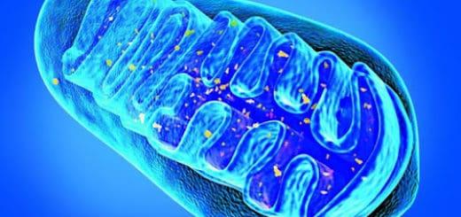 mitochondria dieta suplementy