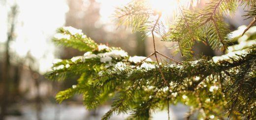 jakie zioła zbieramy w zimie