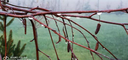 Pełne mocy zioła i rośliny lecznicze zbierane podczas zimy