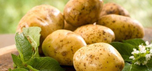 ziemniaki właściwości lecznicze