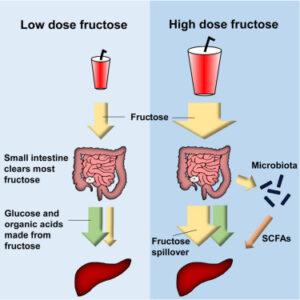 fruktoza cukier metabolizm