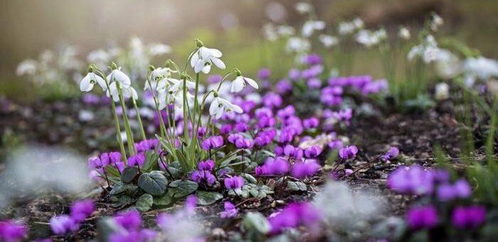 jakie zioła w marcu, jakie zioła wiosną