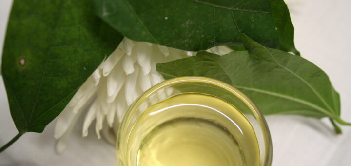olejek kamforowy