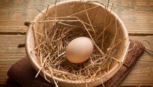 wiejskie jajka świeże jak rozpoznać