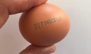 cyfry na skorupce, numery na skorupce jajka