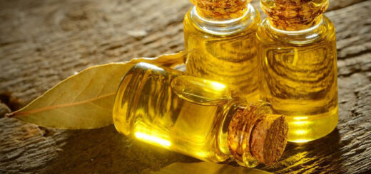 olejek kamforowy właściwości lecznicze
