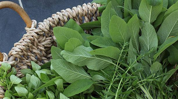 śledziona zioła leczenie