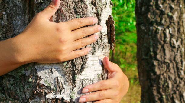 Lecznicza moc drzew - jak wybrać dla siebie drzewo przytul się do drzewa