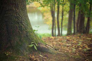 jak działają drzewa zdrowie
