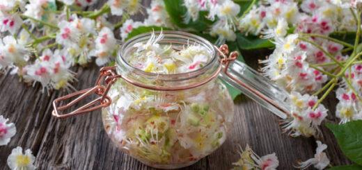kwiat kasztanowca właściwości przepisy lecznicze