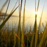 patrzenie w słońce o wschodzie słońca