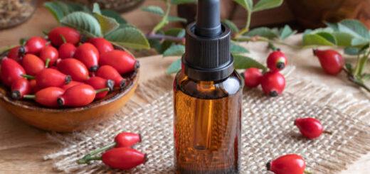 Dzika róża - receptury lecznicze, kosmetyczne i kulinarne