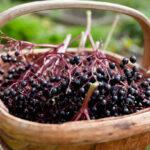 Syropy i domowe przetwory z owoców czarnego bzu