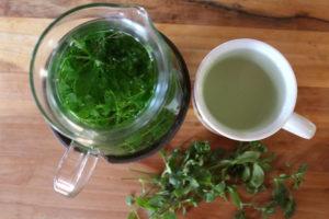 herbatka z gwiazdnicy napar