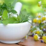 Ból żołądka – jakie zioła pomogą w zależności od przyczyny ?