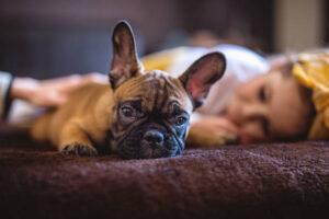 Niedobór snu powoduje, że mózg zjada sam siebie