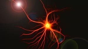 komórki mózgowe niedosypianie, brak snu