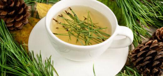 Herbatka z igieł sosnowych i inne sprawdzone receptury z gałązek sosny