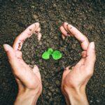 Kwas fulwowy - cud życia w glebie. Niezbędny składnik zdrowia