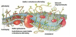 sucha skóra tłuszcze cholesterol