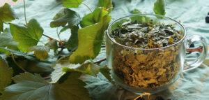 czarna porzeczka liście