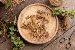 urticae radix korzeń pokrzywy