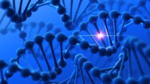 biofotony w komórkach ludzkich, pole morfogenetyczne