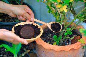 fusy z kawy do roślin w ogrodzie