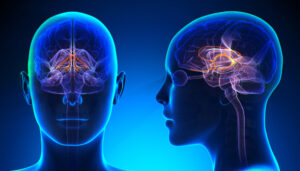 układ limbiczny walcz uciekaj