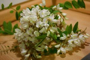 kwiaty robinii akacjowej