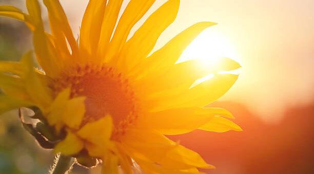 Sierpień w rytmie natury - tendencje zdrowotne, energetyka, zioła